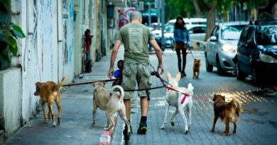 Tel Aviv Will Test Dog Poop DNA to Fine Owners Who Don't Clean Up